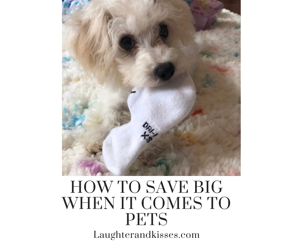 How to save big when it comes to pets6